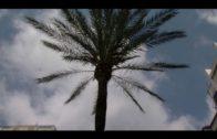 El Ayuntamiento lleva a cabo la poda de las palmeras de la avenida Gesto por la Paz