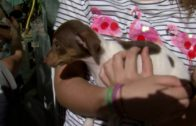La Protectora de Animales comarcal organizará una jornada de puertas abiertas el 15 de septiembre
