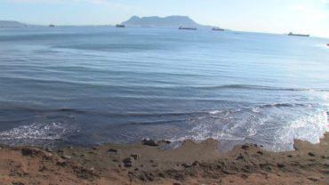 Plataforma Salvemos Valdevaqueros reclaman iniciar la investigación sobre la invasión del alga asiática