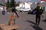 La Jefatura de la Policía Local acoge la fase presencial del curso de formación de guías caninos