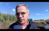 Emalgesa y Algesa limpian el cauce del Cachón en el Rinconcillo para evitar inundaciones