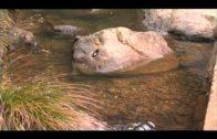 Ecologistas pide en la UE la paralización de las captaciones de agua del Parque de Los Alcornocales