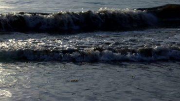 La playa de Getares se llena de nuevo del alga asiática