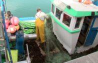 Concluye el primer año del estudio sobre el alga asiática de la Fundación Cepsa y la Universidad de Sevilla