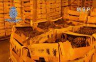 Detenidas 18 personas e incautada una tonelada de cocaína impregnada en el cartón de cajas de fruta