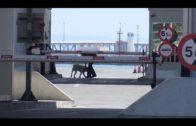 Intervenidos en el Puerto de Algeciras más de 53 kilos de hachís, ocultos en un remolque
