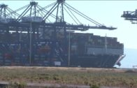 TTI Algeciras contribuye con 11.000 kilos de comida  al Banco de Alimentos del Campo de Gibraltar