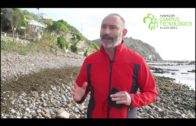 El proyecto «Alga invasora en el Estrecho. Eliminación por valoración», premio I+D+i