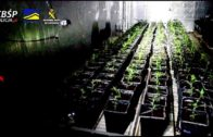 Cae la organización más activa de tráfico de marihuana en Europa asentada en la provincia de Málaga