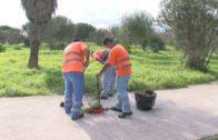 El Ayuntamiento acomete tareas de limpieza y adecentamiento en los parques del Torrejón y El Pícaro