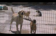 Apadis dona tonelada y media de productos a la Sociedad Protectora de Animales y Plantas
