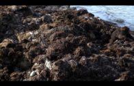 APBA pide una solución al bloqueo de las importaciones hortofrutícolas en el Puerto