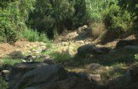 La Junta de Andalucía limpia y desbroza la zona del río de la Miel
