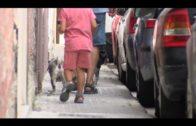 Policía Local pondrá en marcha una campaña de control sobre animales de compañía